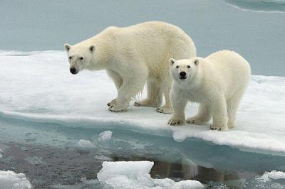 les photo de les ours 332282367_small-2