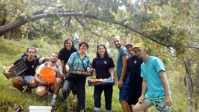 Récolte d'abricots (par Anne-Lise Cabanat)